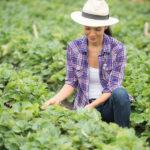 Produtor Agrícola pode ser MEI em 2021?