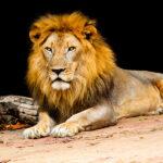 Carnê-Leão Web vai permitir maior interação das informações